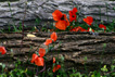 piros virágok